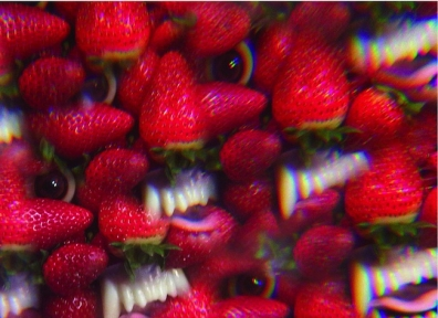 Review: Thee Oh Sees