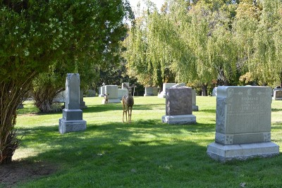 Deer can often be seen roaming Mt. Olivet Cemetery.