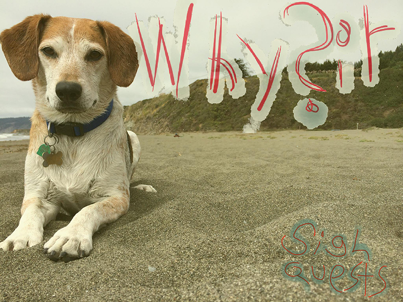 Local Review: Whysir – Sigh Quests