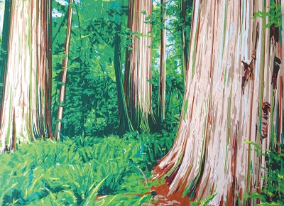 Redwoods by Chad Farnes