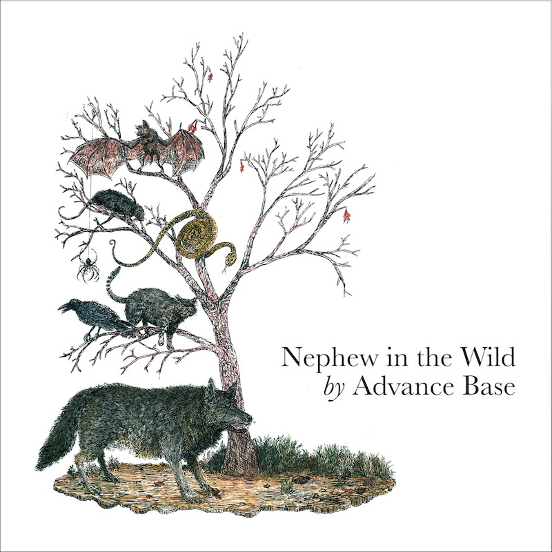 Review: Advance Base – Nephew In the Wild