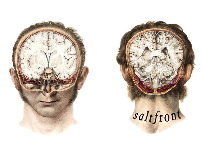 Review: Saltfront Vol. 3
