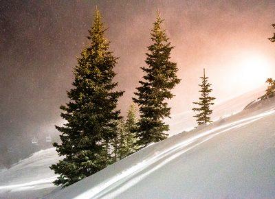 Night trees. Photo: Jo Savage // @SavageDangerWolf