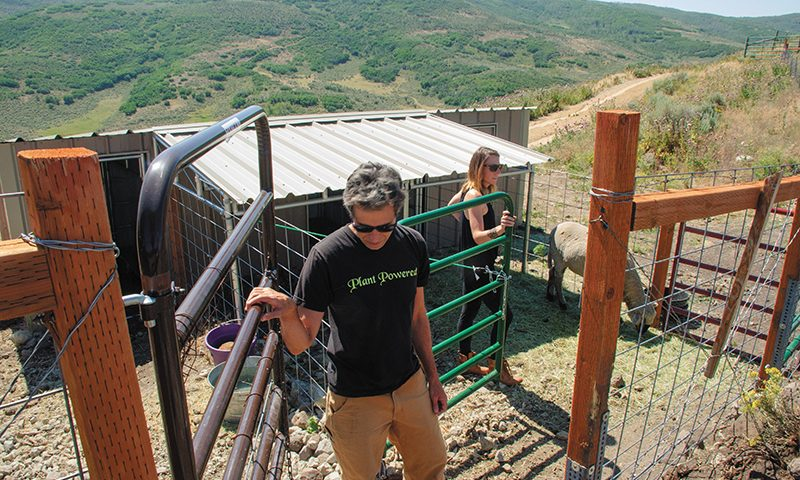 (L–R) Dave Swartz and Lauren Lockey discuss a plant-base lifestyle while showing their sheep pen. Sammie, right, is a newer resident at Sage Mountain. Photo: rachelmolenda.com