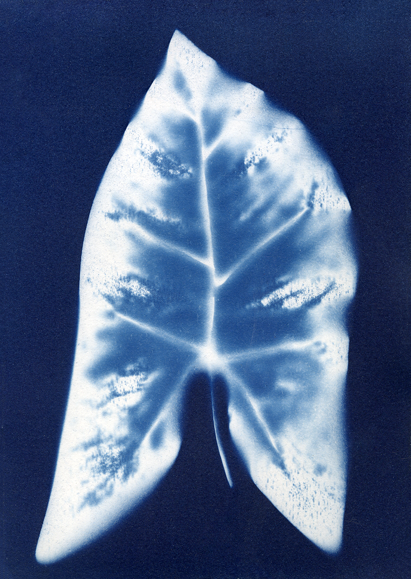 "Nancy Rivera, ""Herbarium Obscura 1"""
