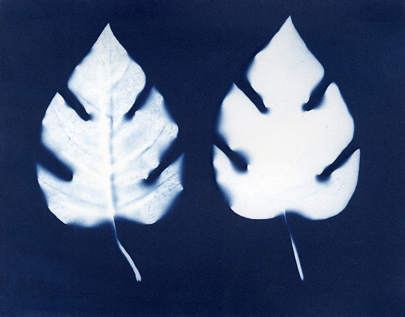 "Nancy Rivera, ""Herbarium Obscura 11"""