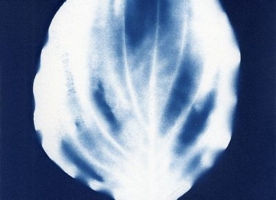 "Nancy Rivera, ""Herbarium Obscura 13"""