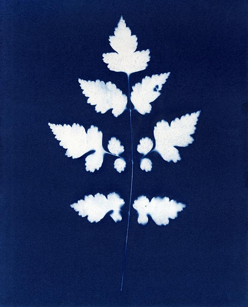 "Nancy Rivera, ""Herbarium Obscura 14"""