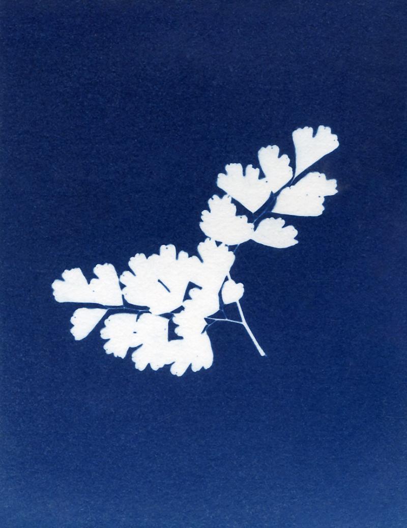 "Nancy Rivera, ""Herbarium Obscura 16"""