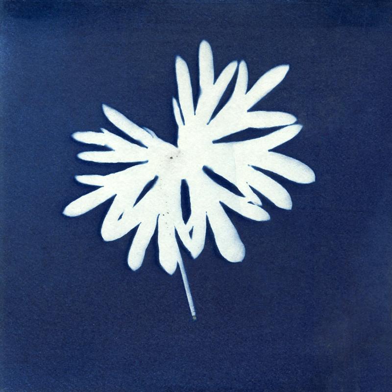 "Nancy Rivera, ""Herbarium Obscura 18"""