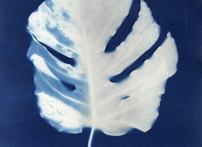 "Nancy Rivera, ""Herbarium Obscura 7"""