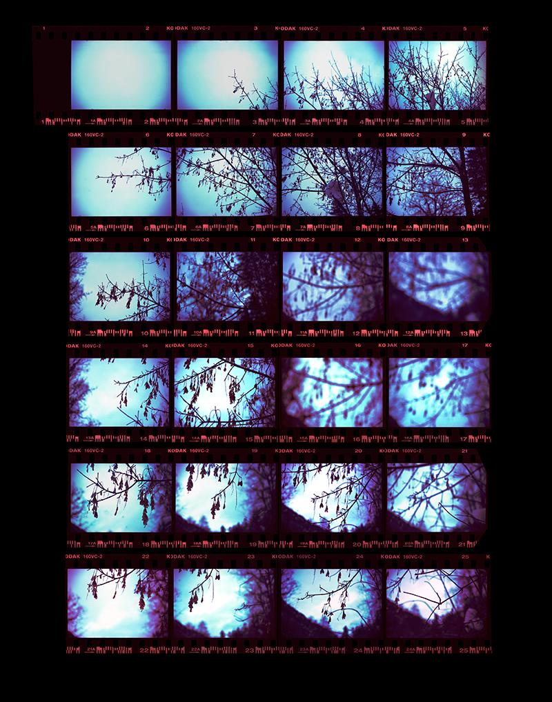 "Christine Baczek, ""Tree Study."""