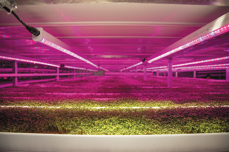 The Future is Hydroponic: Debbie Strong of Strong Vertical Gardens