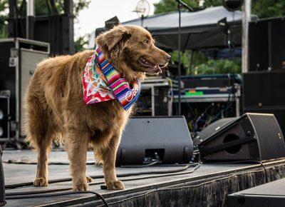 Stage dog Cocoa entertains the crowd