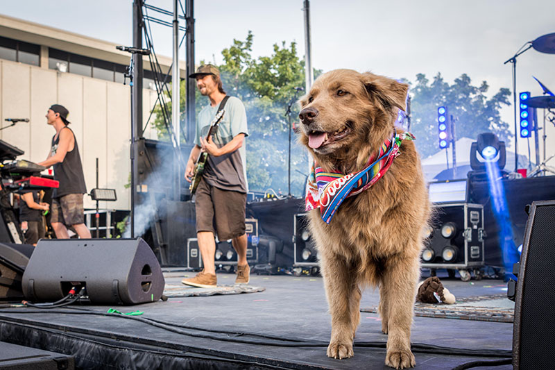 Stick Figure takes the stage with their rescue dog Cocoa.