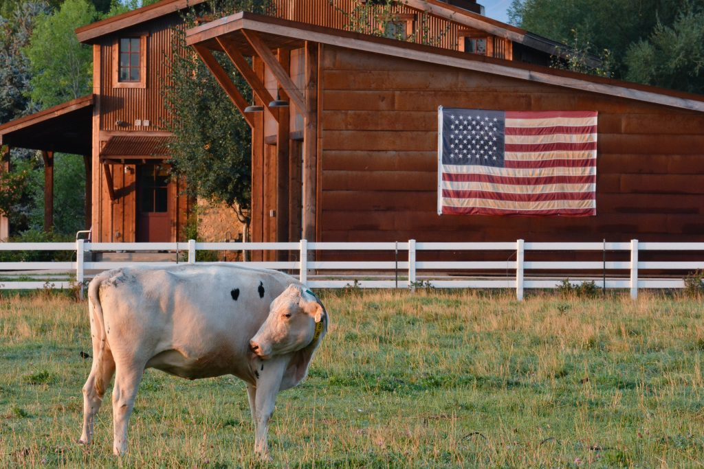 Reinvesting in the Land: Heber Valley Artisan Cheese
