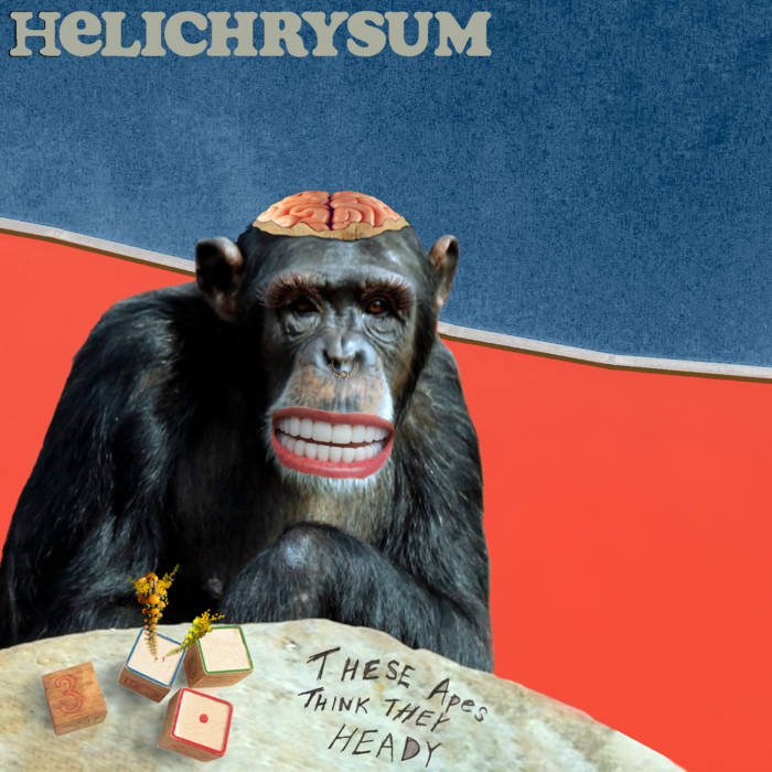 Local Review: Helichrysum –These Apes Think They Heady