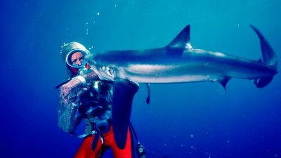 Playing with Sharks is so much more than just the latest cash grab on the subject—it' s a loving tribute to an extraordinary person.