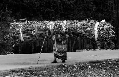 A woman walks down the road with a bundle of eucalyptus sticks on her back. She walks up the road to gather the sticks each day, then carries them down to the village so sell for firewood, to earn money for her family, near Addis Ababa, Ethiopia, on Tuesday March 10, 2020.