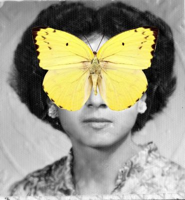 Sarah May, The Lemon Immigrant, photograph collage, 2020.