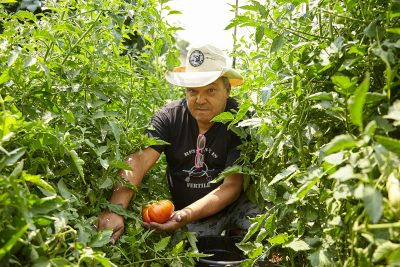 """90.9FM KRCL's Aldine Grossi, the Punk Rock Farmer, aims to galvanize our local community to grow """"big F'n tomatoes""""—or whatever you'd like to grow—in your own backyard."""